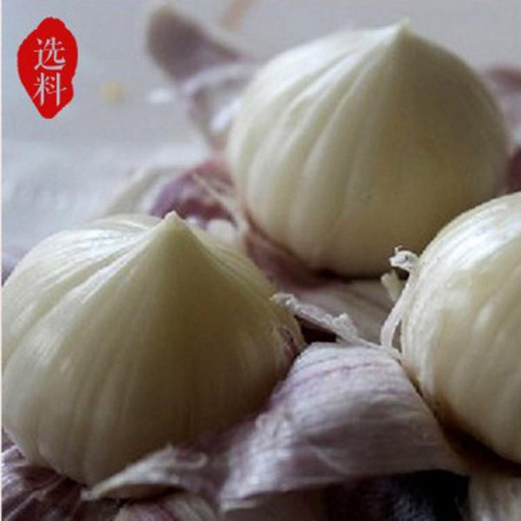 Wholesale fresh white garlic for export