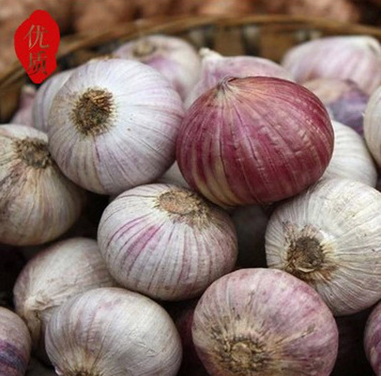 2017 new crop bulk garlic with competitive price