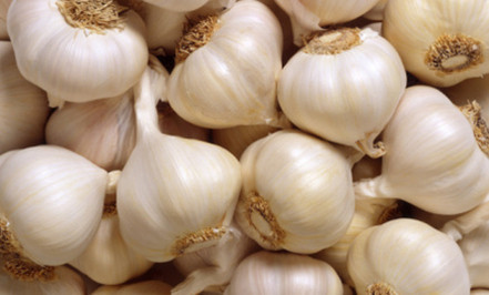 Participate output of egyptian dry garlic with good price/ red / yellow dry garlic