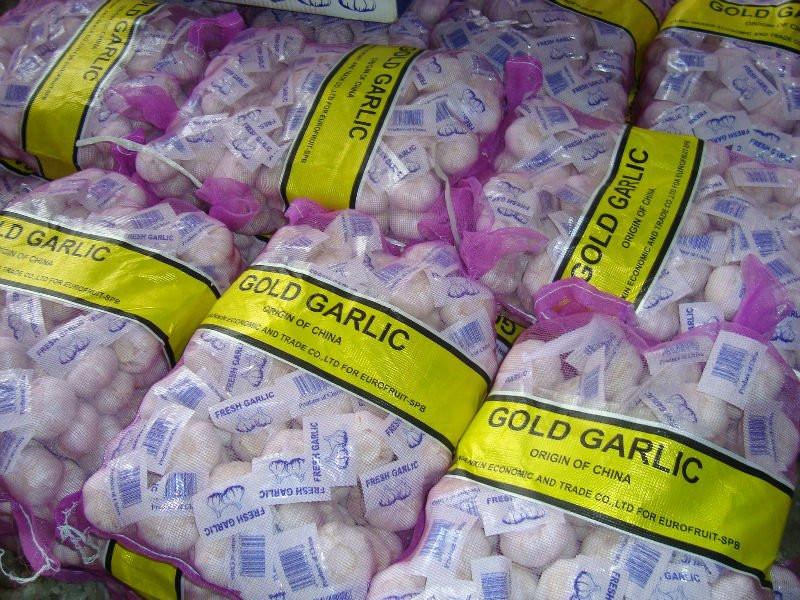 new season garlic