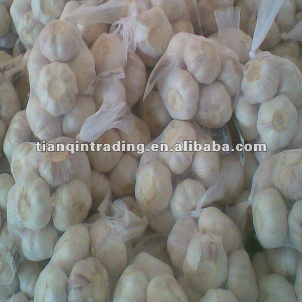 fresh garlic 2017 low price
