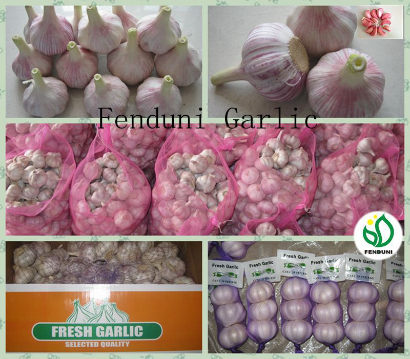 Common Cultivation Liliaceous Vegetables 2017 fresh garlic