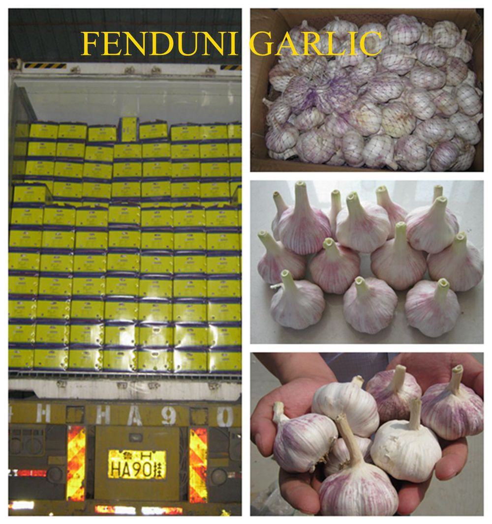 2017 Natural garlic 50mm with high quality and best price