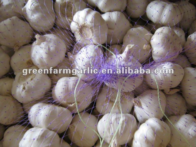 2011 chinese jinxiang fresh garlic