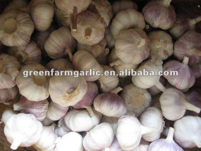 china fresh garlic price