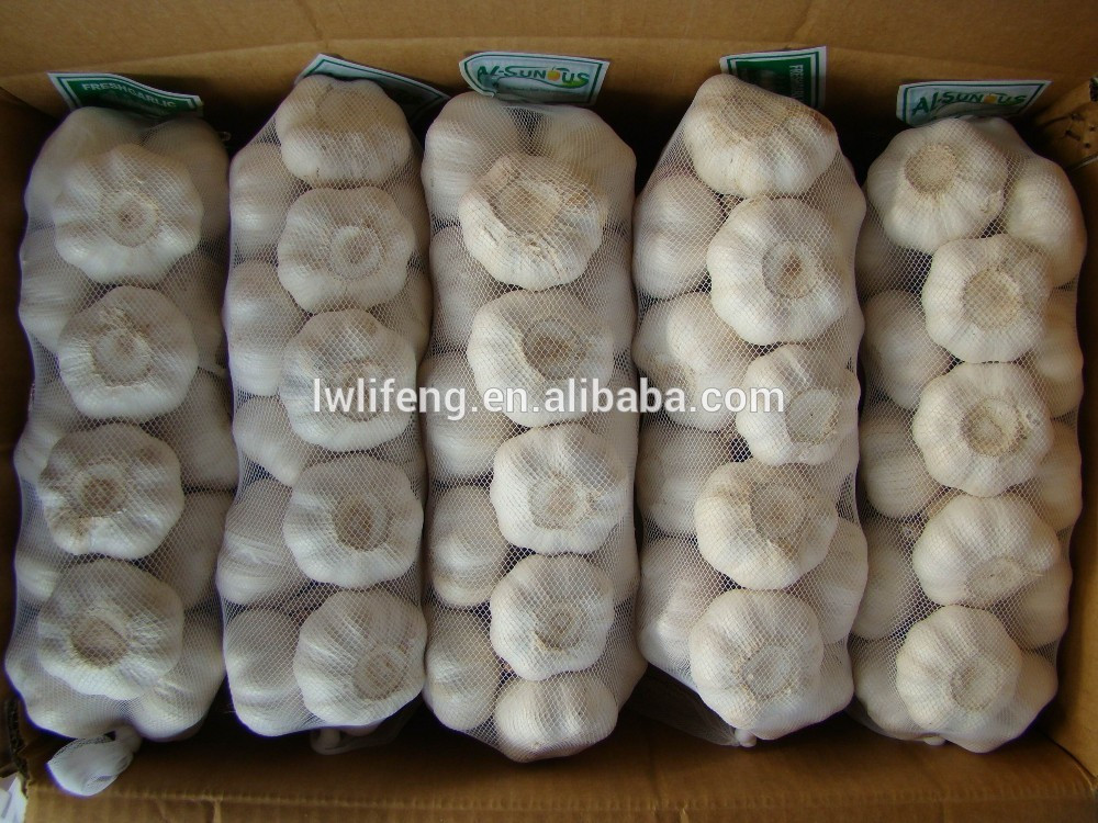 top quality White Garlic / fresh Garlic / Chinese garlic