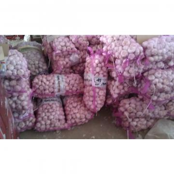 China fresh garlic exported to Thailand market