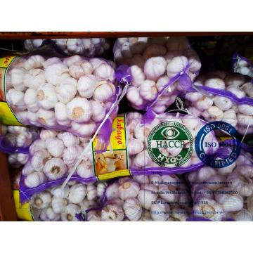 China normal garlic with meshbag to Philippines market