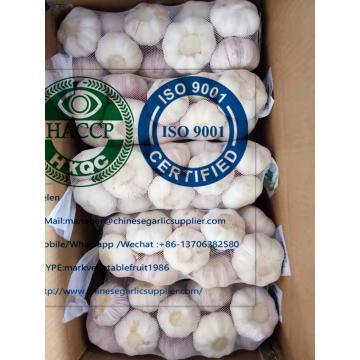 10kg carton normal white garlic to Ghana market