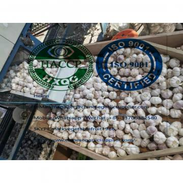 10KG Loose carton Normal white garlic are exported to Africa market from china