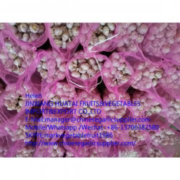 china garlic with meshbag to Russia market