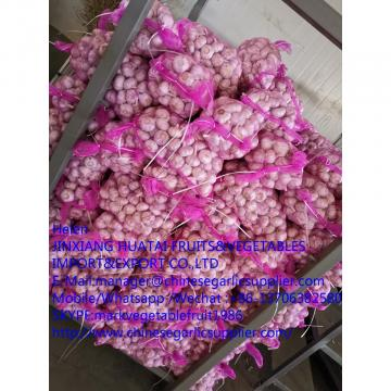 Normal white garlic with meshbag to Russia market from china factory