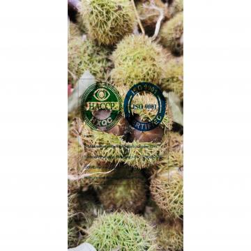 Top quality china fresh chestnut are exporting to turkey market.