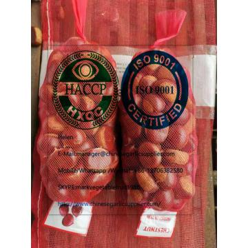 Top quality fresh chestnut to turkey market from china factory