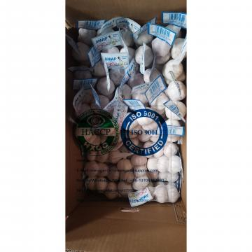 NORMAL WHITE GARLIC TO COSTA RICA MARKET FROM CHINA GARLIC FACTORY