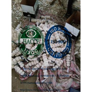 Top pure white garlic 4.5cm to Iraq market through Mersin port. Turkey.