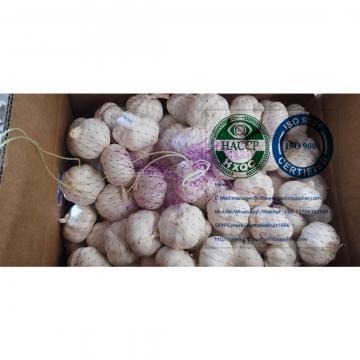 Top quality china pure white garlic to EU market from china garlic factory