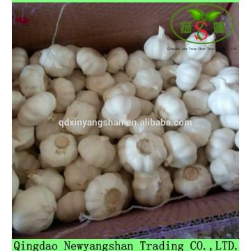 Professional Garlic Exporter In China Wholesale Chinese Garlic Packing In 10KG Boxes