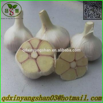 Hot Sale Chinese Garlic With A Purple White Skin Outside And Each Clove Purple White Skin Inside