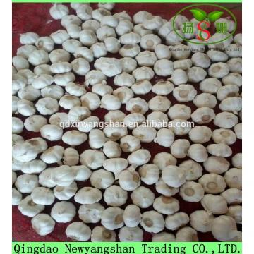 Hot Sale Chinese White Fresh Spicy Garlic