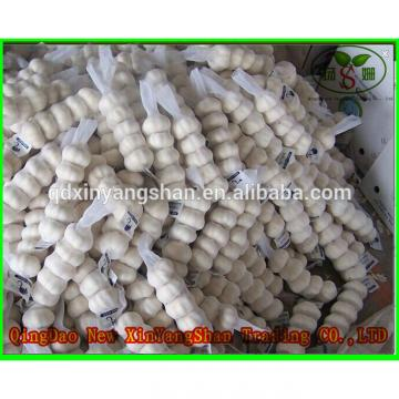 Professional Chinese Garlic Supplier Health Benifits Fresh White Garlic