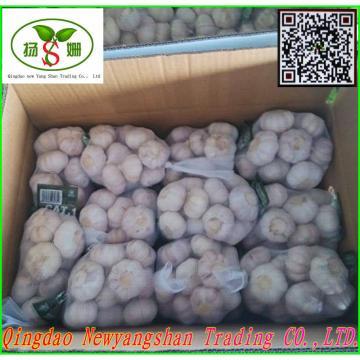 Price Of Fresh Chinese Garlic Specification 4.5cm 5.0 cm 5.5cm 6.0cm