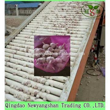 Fresh Garlic Packing In Mesh Bag For Sale In A Wholesale Price