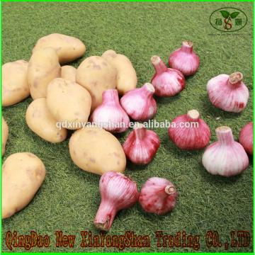Shandong Garlic Wholesale Export Price 2017