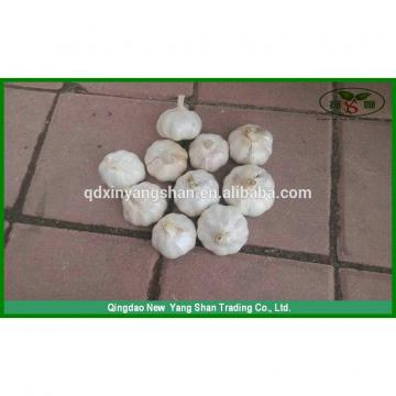 (HOT) Fresh white GARLIC/GARLIC SIZE: More Than 5CM