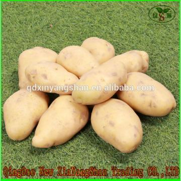 (HOT) FRESH Garlic/CHINA Purple Garlic,good faith wholesalers