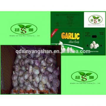 (HOT) Shandong Purple Garlic Product Exporte to Dubai 10kg/Carton