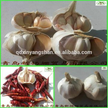 2017 factory hot sale fresh garlic