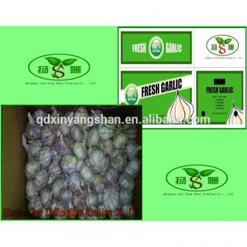 (HOT) Wholesale fresh purple garlic exporters in China
