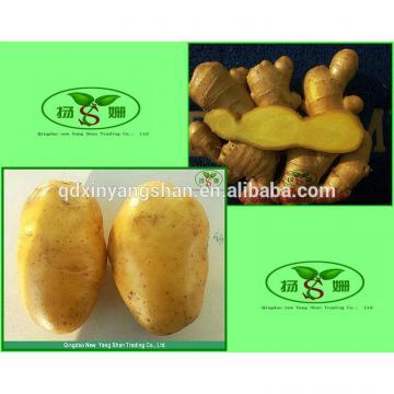 (HOT) Wholesale fresh purple garlic exporters in China