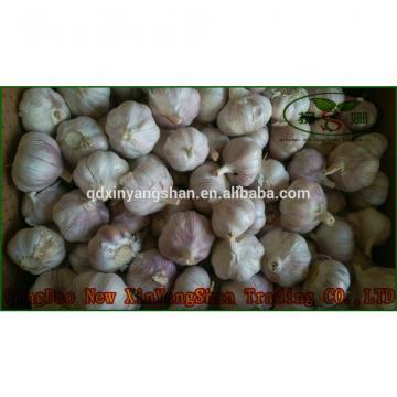 Pure Purple Garlic, Normal Purple Garlic