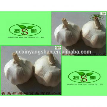 [HOT] 2017 fresh white garlic from 4.0cm---6.0cm