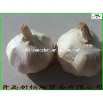 fresh garlic vegetable distributor in China