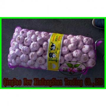 Fresh Chinese Jinxiang Garlic Price Per Ton Packing In Mesh Bag