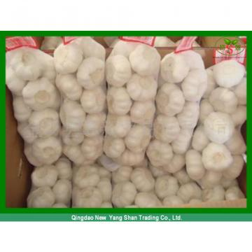 Chinese 2017 Fresh Garlic Price Purple/Red/Pure White Garlic