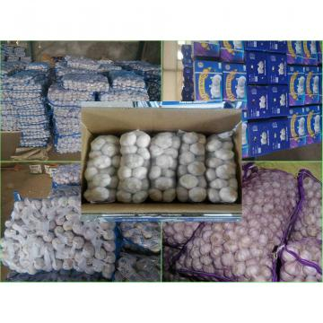 Garlic Production Peeled Garlic Wholesale Price