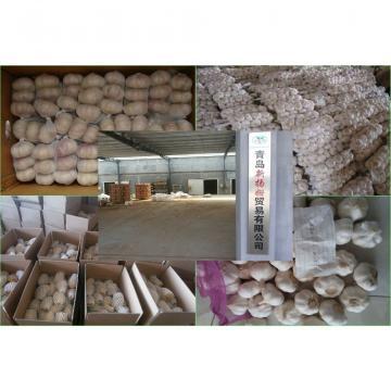 Fresh Chinese Garlic Wholesale Price