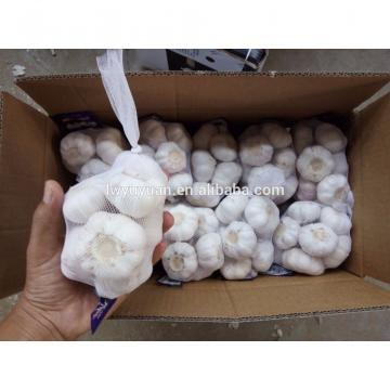 YUYUAN brand hot sail fresh garlic garlic packing