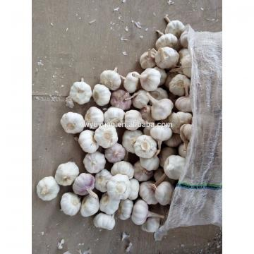 YUYUAN brand hot sail fresh garlic garlic digger
