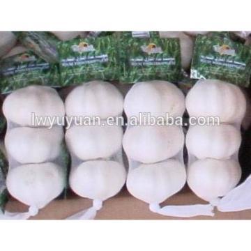 YUYUAN brand hot sail fresh garlic garlic market price