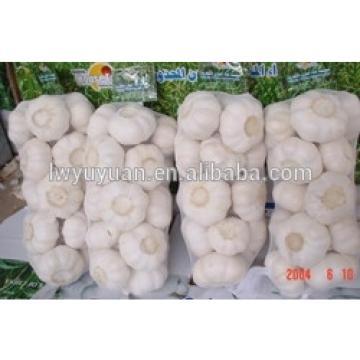 YUYUAN brand hot sail fresh garlic garlic for the international market