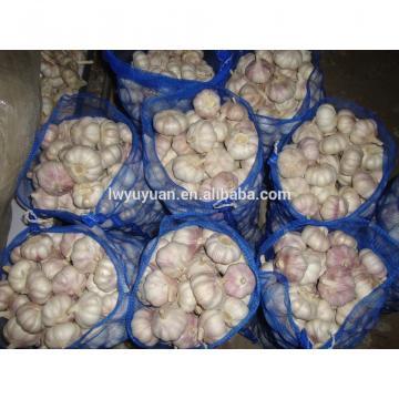 YUYUAN brand hot sail fresh garlic garlic netherlands