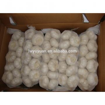 YUYUAN brand hot sail fresh garlic garlic distributor