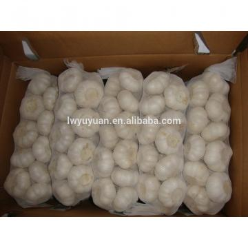 YUYUAN brand hot sail fresh garlic garlic grading machine