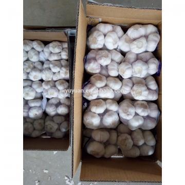 YUYUAN brand hot sail fresh garlic garlic oil bulk