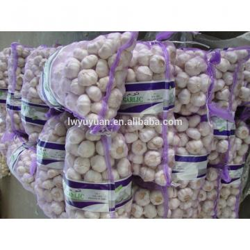 YUYUAN brand hot sail fresh garlic garlic exporters china